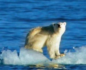 Global warming effect on arctic