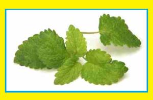 Medicinal uses of lemon balm