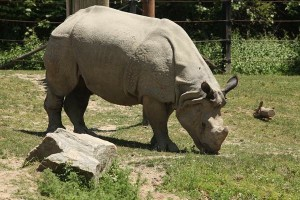 Picture of endangered species   Article on endangered species